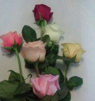 rose rosse e composizioni fiori per feste, fiori freschi, fiori recisi