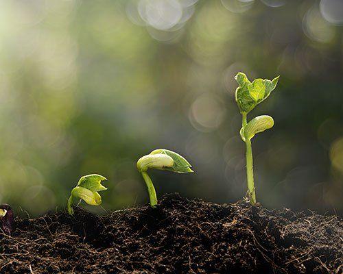 tre germogli nel terreno