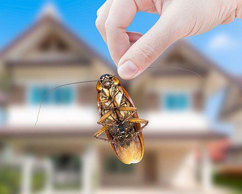 una mano che tiene uno scarafaggio dalle antenne
