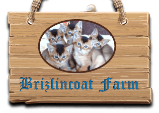 Brizlincoat farm logo