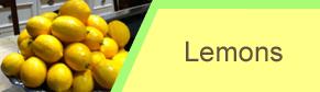 Lemons - Lemon Orchard