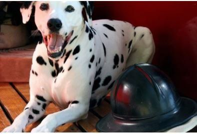 Pet Insurance: Can You Afford to Wait?