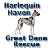 Harlequin Haven Great Dane Rescue