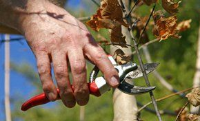 tree pruning experts