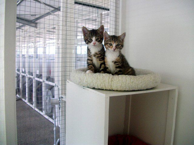 two cats in family unit at The Cattery