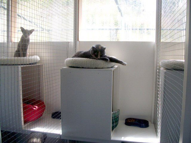 cat in a single unit at The Cattery