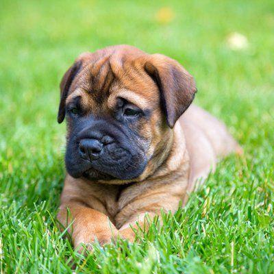 dog sitting on the lawn