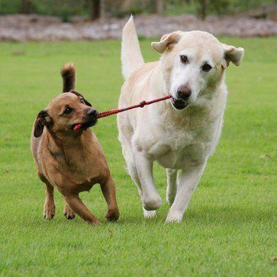 2 dogs running