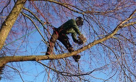 Our arboricultural work