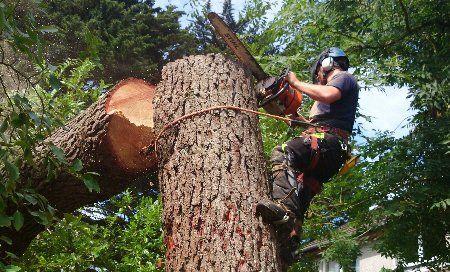 Superb tree work