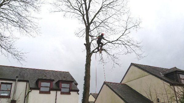 Arboricultural experts at work