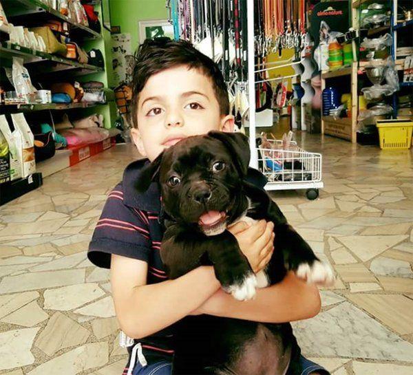 Bambino con cucciolo in un negozio di animali
