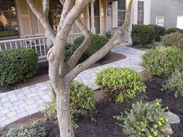 Landscape with tree — Landscaping in East Syracuse, NY - Complete Landscaping Services - East Syracuse, NY - Turf Tamerz