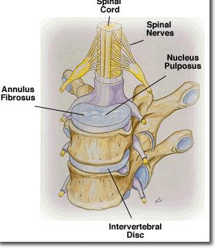 manual handling rh uetraining co uk manual handling spine anatomy manual handling the spine needs to be