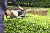 Landscaper providing lawn maintenance in Wailuku, HI