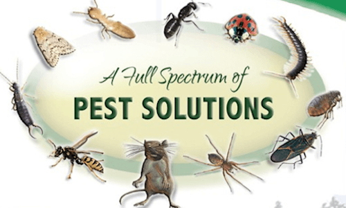 A full spectrum of pest solutions