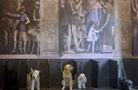 area d'attesa cani post lavaggio