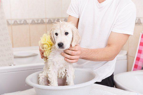 Un uomo mentre lava un cane con una spugna