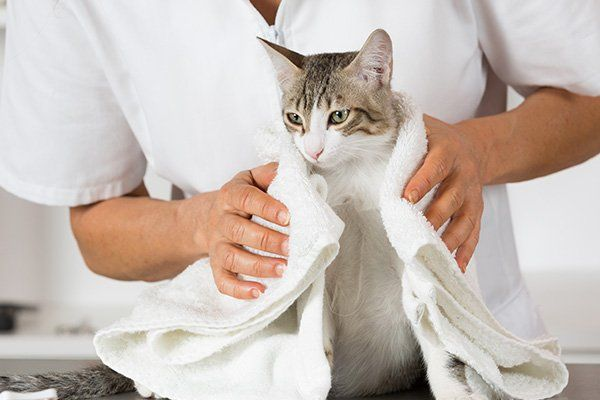 Un uomo mentre asciuga un gattino con un asciugamano bianco