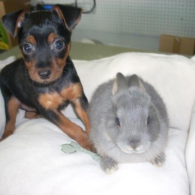 Image of our Bunnies and puppies in Mililani, HI