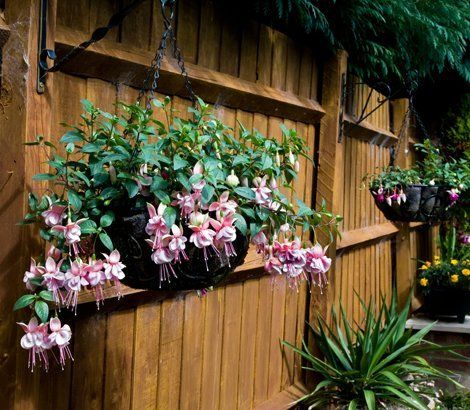 Wooden panel fencing with hanging baskets in the foreground