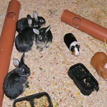 little black rabbits