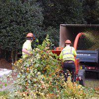 tree-surgery-oakenshaw-redditch-amies-tree-care-stump-grinding