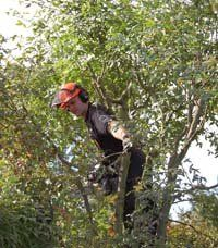 tree-care-oakenshaw-redditch-amies-tree-care-tree-surgeons
