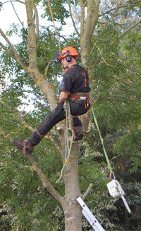 tree-surgeon-oakenshaw-redditch-amies-tree-care-working