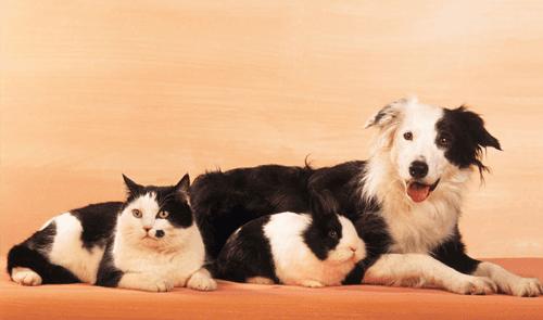 cat, dog and rabbit