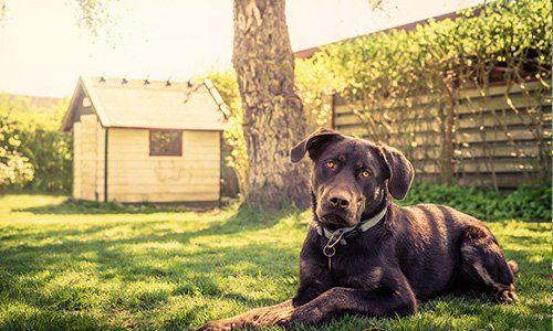 Prodotti per cani presso Agraria Siamo Al Verde a Cantoira (TO)