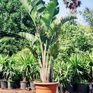 Palme e altre piante nei vasi appoggiati