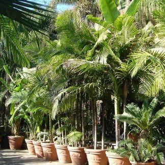 Piante tropicali nei vasi di terracotta