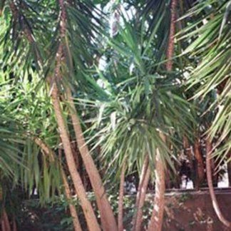 Vista ravvicinata delle palme