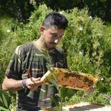Vendita arnie e materiale in legno per apicoltori