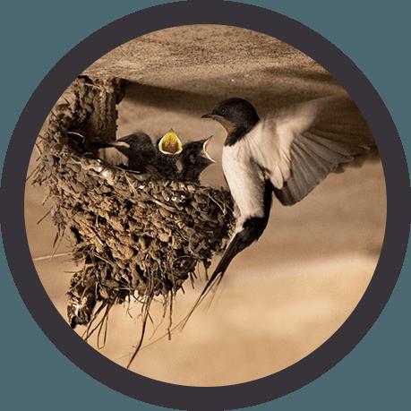 Bird nest removal