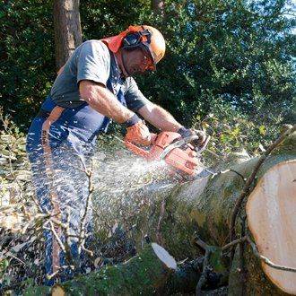 emergency tree work