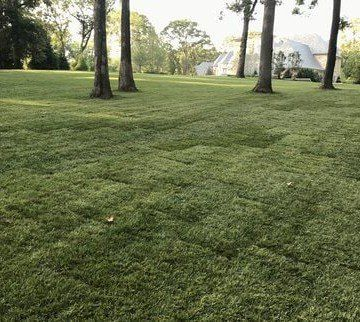 Tall Fescue Grass Installation