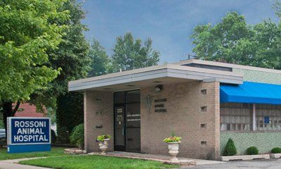 Animal Hospital Care | Taylor, MI | Rossoni Animal Hospital