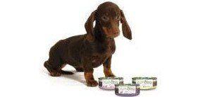 cane con scatolette