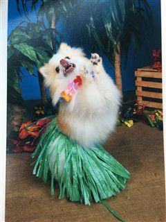 winner - Pomeranian costume most enthusiastic