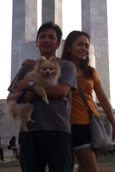 Pomeranian in the Philippines