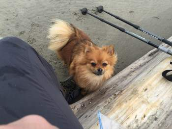 Bring your Pom with you