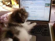 Pomeranian on computer