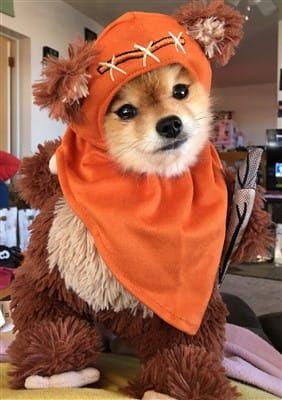 Pomeranian Ewok costume