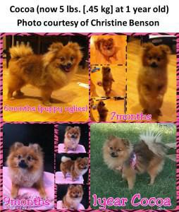 Growth stages of Pomeranian