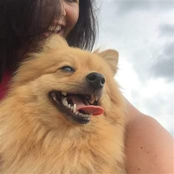 happy Pomeranian