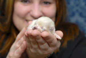 newborn Pomeranian