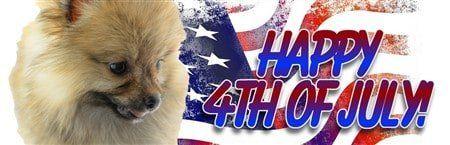 Pomeranian Fourth of July Greeting