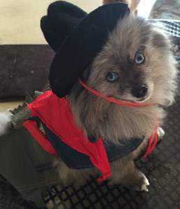 Pom dressed up with hat